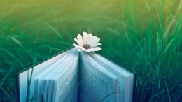 desktop-grass-wallpapers-pictures-flowers-books-nature-wallpaper-flower